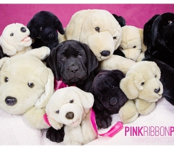 Pink Ribbon Puppies 2015