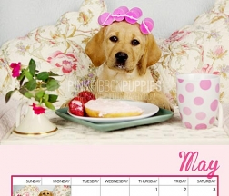 2014 Pink Ribbon Puppies Calendar Ms. May
