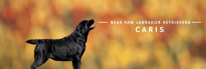 Bear Paw Caris