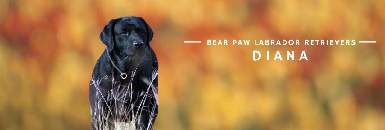Bear Paw - Diana