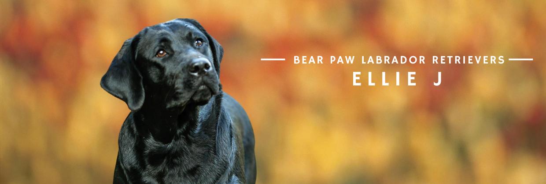 Bear Paw Ellie J
