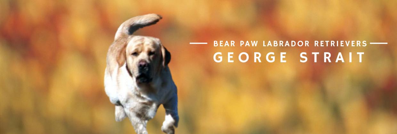 Bear Paw George Strait