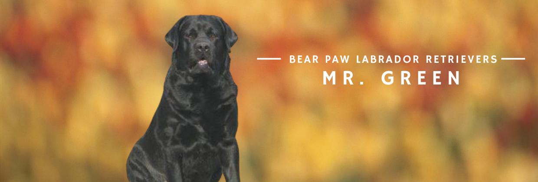 Bear Paw Mr. Green