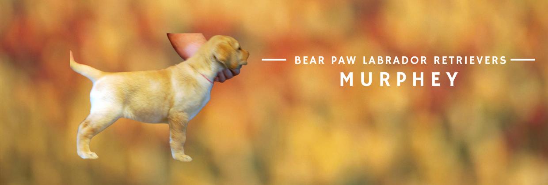 Bear Paw Murphey