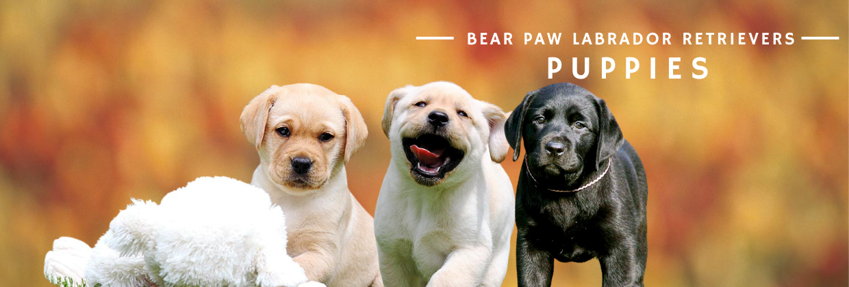 Bear Paw Puppies