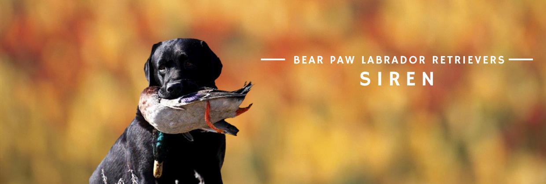 Bear Paw Siren