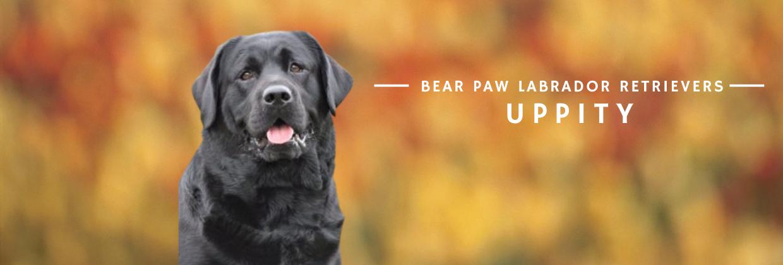 Bear Paw - Uppity